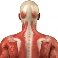 Natural Treatment For Myofascial Pain Syndrome