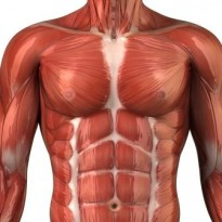 chest myofascial pain syndrome muscle pain